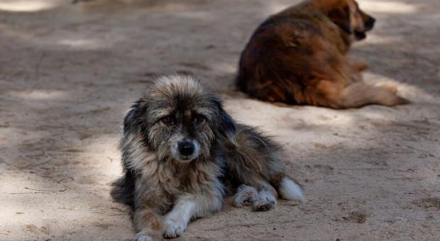 Francja uruchamia środki w walce z porzucaniem zwierząt domowych