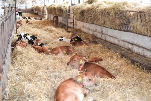 Jak będą wspierani rolnicy, którzy będą musieli zrezygnować z chowu klatkowego?