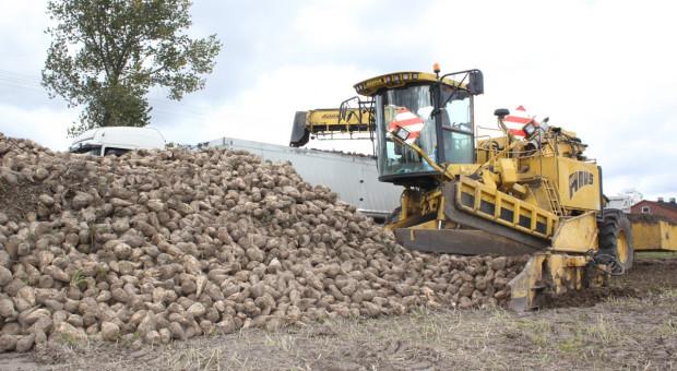 Jakie średnie plony korzeni i cukru w 2020/21 w Pfeifer&Langen?