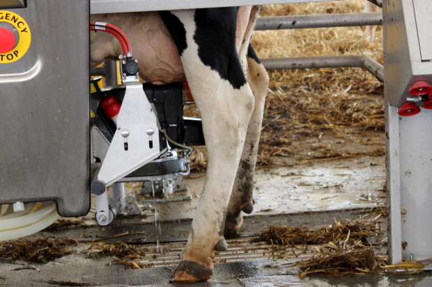 Okiem Farmera: Sektor mleczarski na plusie, ale co dalej?