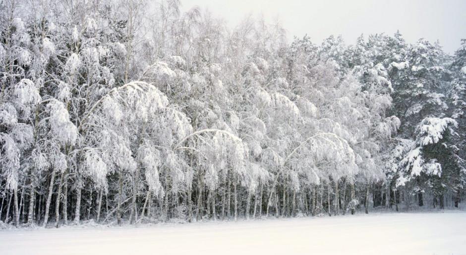 Prognoza pogody na 11 i 12 lutego