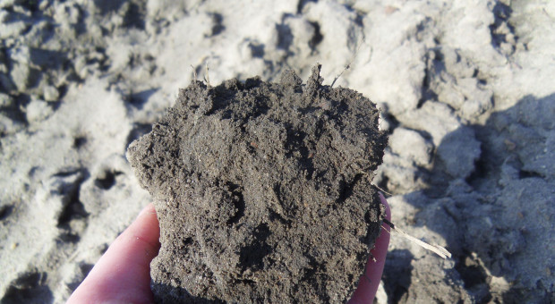Badanie azotu mineralnego