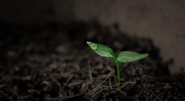 Rośliny i bakterie mogą oczyszczać glebę z zanieczyszczeń ropopochodnych