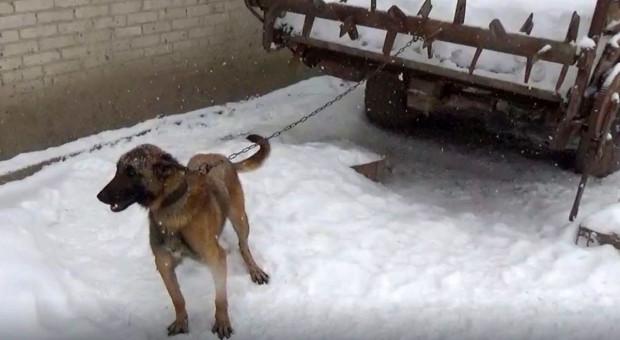 18 psów odebranych z gospodarstwa