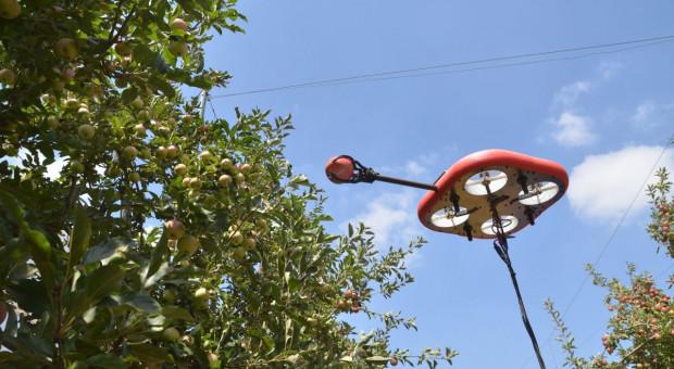 Kubota inwestuje w latające, autonomiczne roboty do zbioru owoców