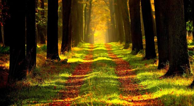 Komisja Europejska rozpoczyna badanie strategii leśnej