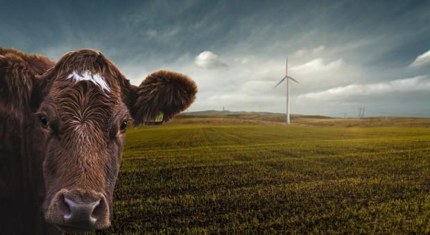 W Niemczech emisje gazów cieplarnianych z rolnictwa spadły w 2019 r.