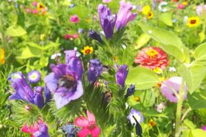 Obrzeża pól a różnorodność biologiczna w  Wielkiej Brytanii