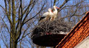 Czy można uzyskać dotację na budowę gniazda dla bociana?