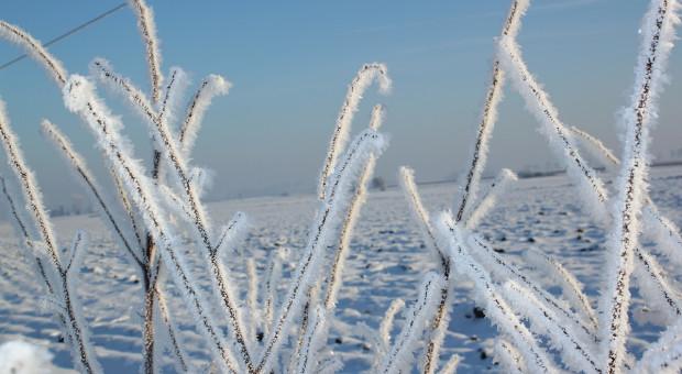 Wraca zima i arktyczne mrozy