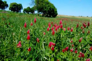 Wpływ pasów kwietnych na zapylanie roślin i kontrolę szkodników