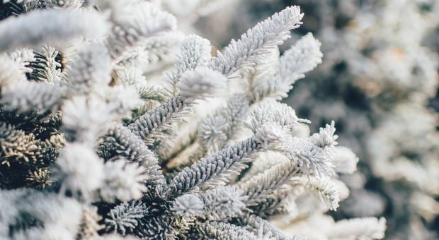 Wróciła zima. I nie odpuści do połowy lutego. W nocy z piątku na sobotę -20 st. C