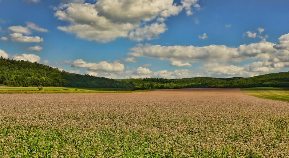Nowe perspektywy dla rolnictwa ekologicznego