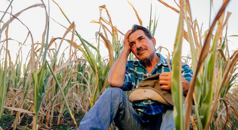 Pandemia i pośrednicy wykańczają sektor rolniczy