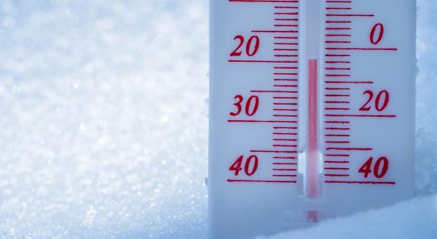 USA: Arktyczne zimno zabija bydło i niszczy oziminy