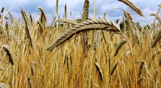 Jaki jest import zbóż?