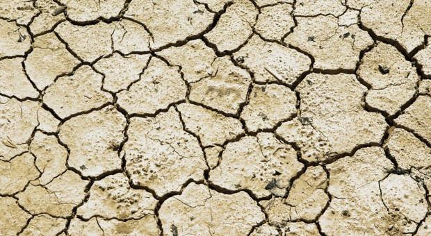 Ekohydrolog: prawdopodobieństwo suszy wiosną – mniejsze niż przed rokiem