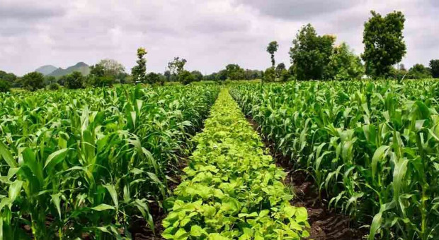 Nestlé stawia na rolnictwo regeneracyjne. Czy widzi w nim przyszłość?