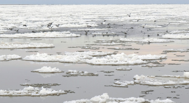 IMGW wydał kolejne ostrzeżenie hydrologiczne - dla Pilicy w rejonie Białobrzegów
