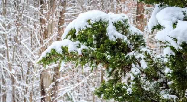 Synoptyk IMGW: opady śniegu na wschodzie Polski; od poniedziałku powrót mrozów