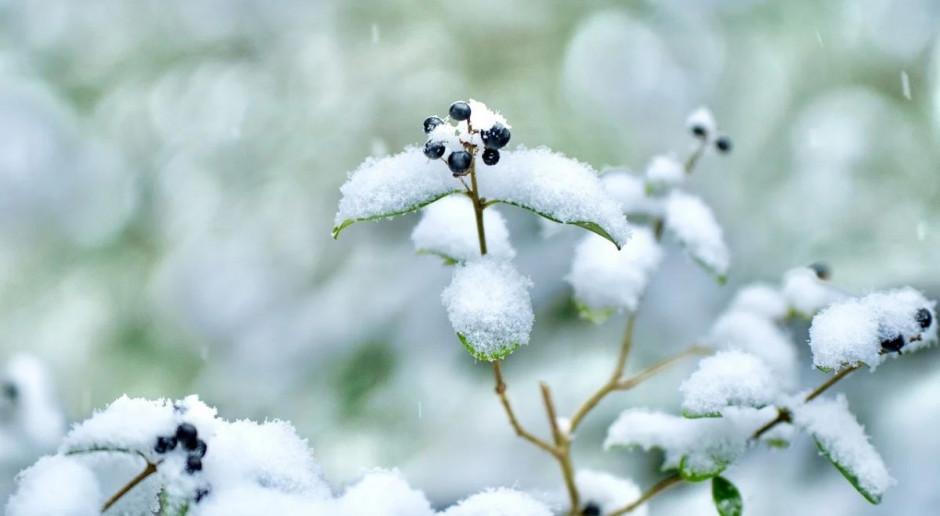 Prognoza pogody na 15 i 16 lutego