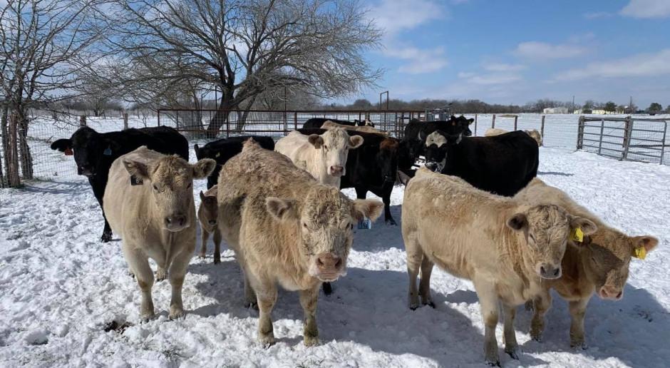 Zima stulecia w Teksasie!