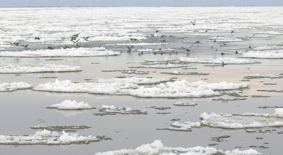 Wody Polskie: lodołamacze przebiły się przez najtrudniejszy odcinek zatoru lodowego na Wiśle