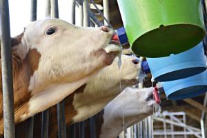 Dobry preparat mlekozastępczy, czyli jaki?