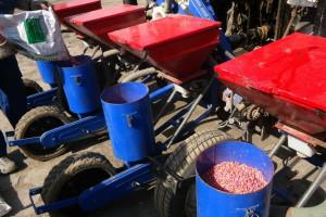 PIdS: Jak termin siewu kukurydzy wpływa na jej rozwój i plonowanie?