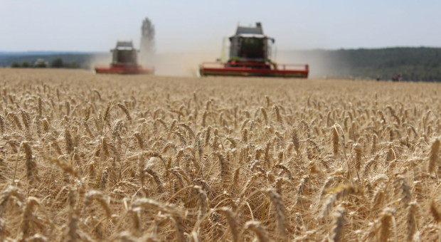 PIdS Online: Jaka strategia ochrony dla wysokich plonów zbóż?