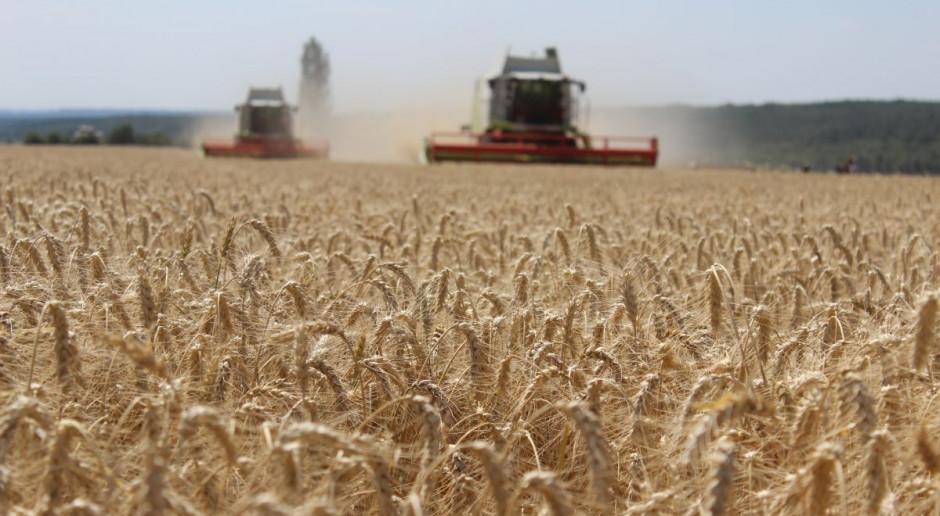 Przez Innowacyjność do Sukcesu Online: Jaka strategia ochrony dla wysokich plonów zbóż?