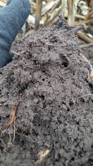 Uprawa pasowa ma dobry wpływ na glebę, poprawia się jej struktura oraz znikają zagęszczenia takie jak np. podeszwa płużna