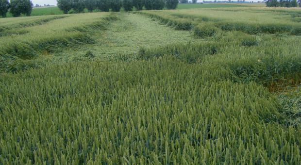 Fungicydy iregulatory wzrostuwparze