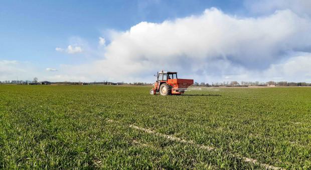 Jak poprowadzić tegoroczną pszenicę ozimą?