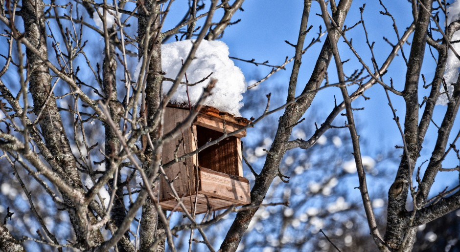 Można już wieszać budki lęgowe dla ptaków
