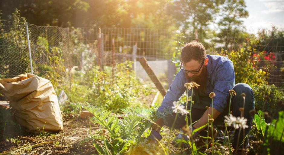 Przydomowe ogrody to ważna stołówka dla zapylaczy