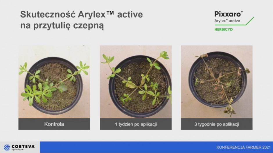 Herbicyd Pixxaro wyróżnia się wyjątkowo skutecznym zwalczaniem przytulii czepnej we wszystkich fazach rozwojowych i szerokim zakresie temperatur. Źródło: Corteva Agriscience.