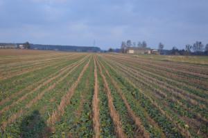 PIdS Online: Już dziś zapraszamy na debatę dotyczącą uprawy pasowej
