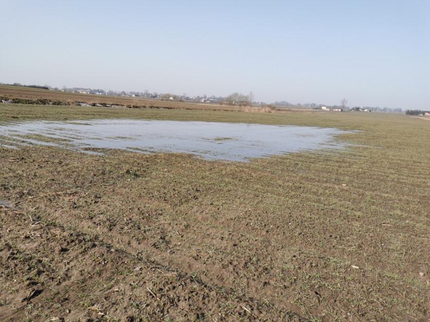 Zastoiska wody na polach Fot. A. Kobus