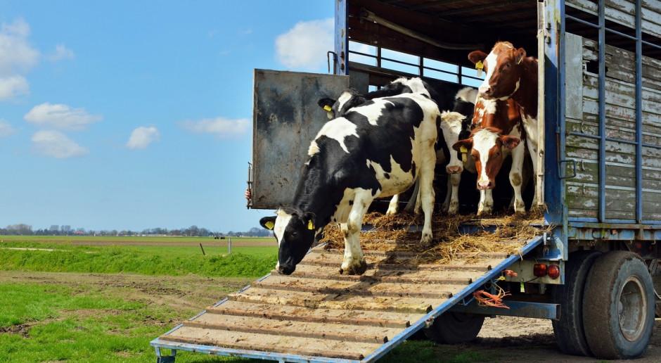 Copa Cogeca: Hodowcy potrzebują transportu żywych zwierząt