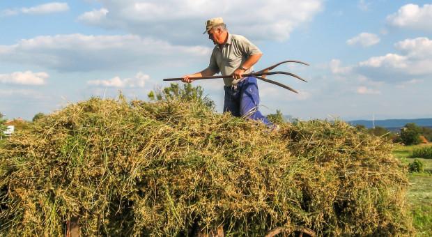 Przybywa pracujących w rolnictwie