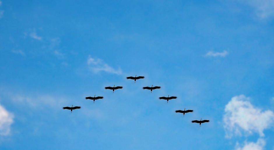 """Skarb Państwa odpowie za szkody wyrządzone przez """"ptactwo prawnie chronione""""?"""