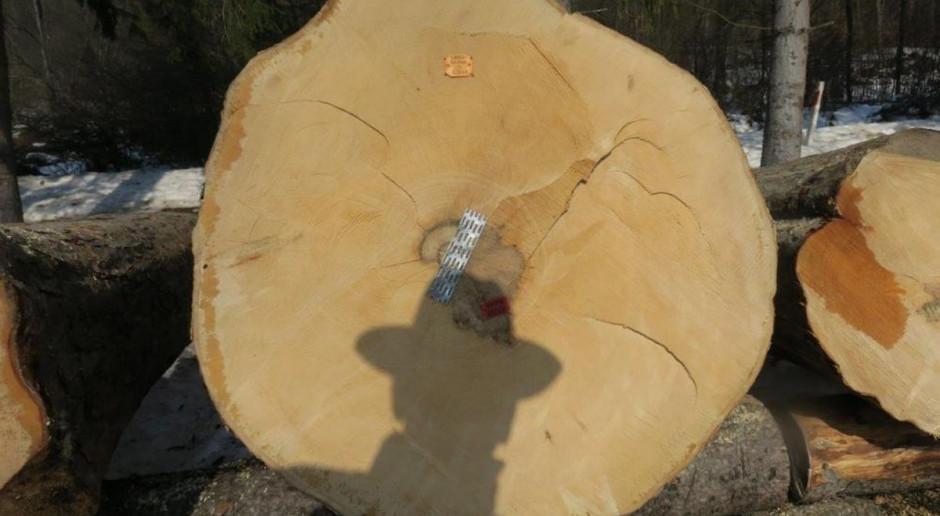 Najcenniejsze drewno poszło pod młotek