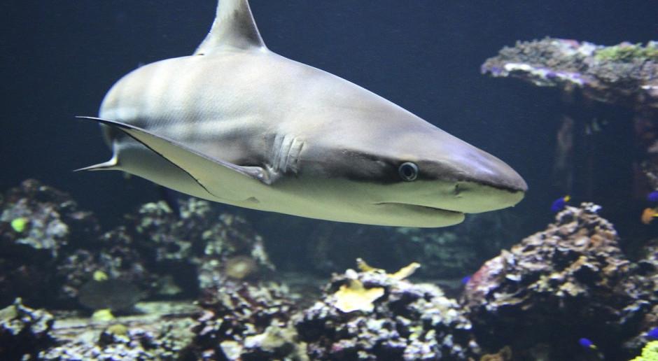 Basen dla rekinów w Łodzi został już wypełniony wodą