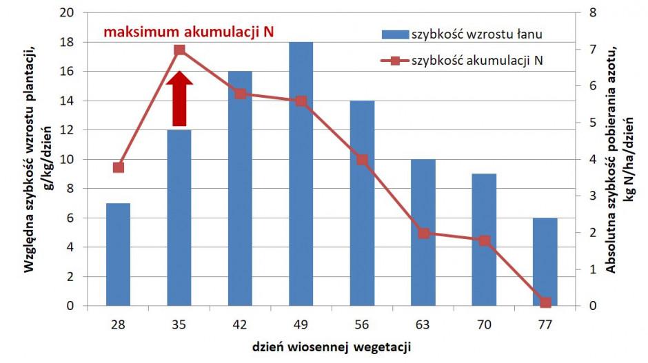 Szybkość wzrostu łanu rzepaku atempo akumulacji azotu (opracowano na podstawie Grzebisz 2011)