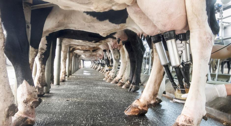 Rosnące ceny pasz największą bolączką producentów mleka