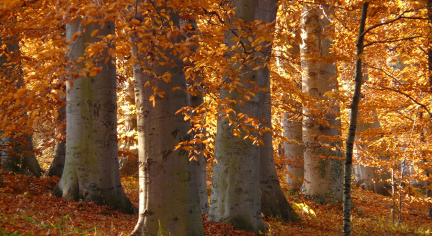 Europarlamentarzyści przeciwko nielegalnemu pozyskiwaniu drewna w Rumunii