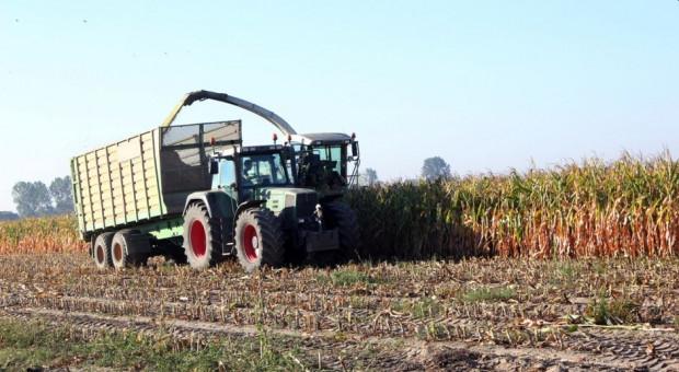 LOZ kukurydzy kiszonkowej 2021 r.
