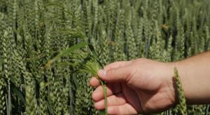 Rolnicy popierają postulaty IOR ułatwiające produkcję roślinną w kraju