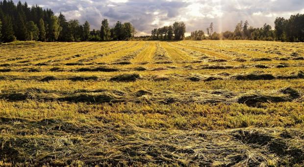Ceny dzierżawy gruntów rolnych w Szwecji nieznacznie wzrosły